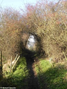 Sentier du bois Coumagne